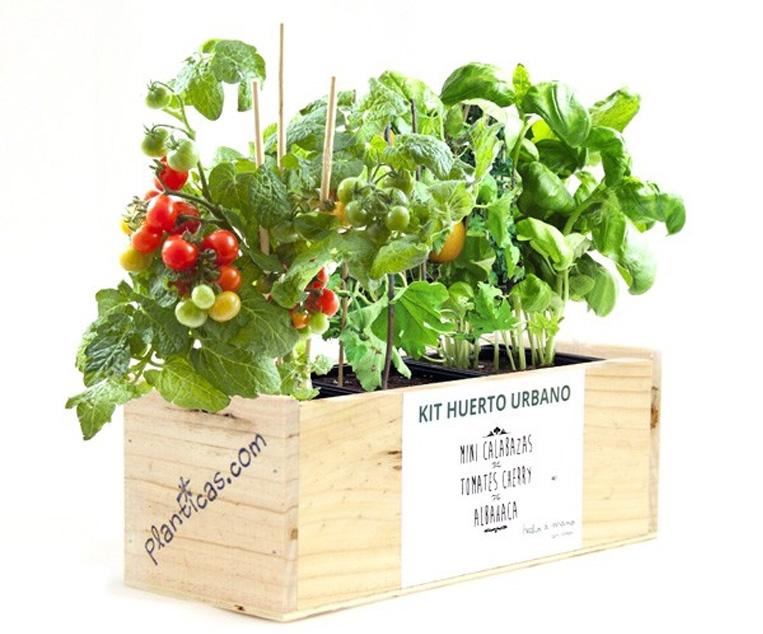 Planticas plantas de regalo originales - Regalos originales para la casa ...