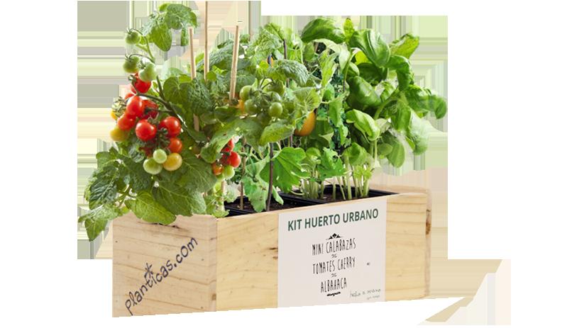Plantas pequeas para regalar como hacer recuerdos de boda para parejas plantas medicinales diy - Plantas pequenas para regalar boda ...